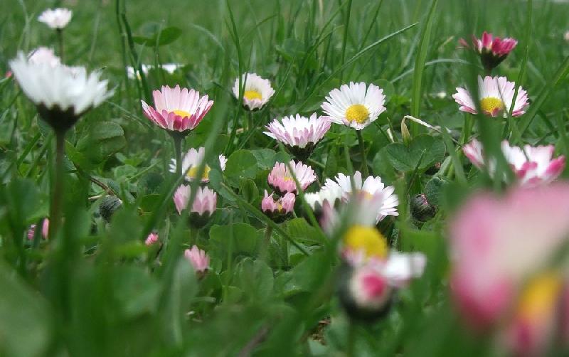 Blumenfotos verschiedene blumen 2 pflanzen garten for Pflanzen blumen
