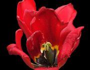 Unterschiedliche Blumen