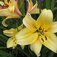 Verschiedene Blumenfotos