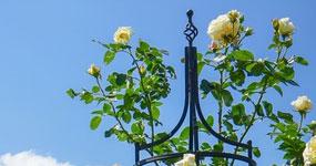 Romantische Rosenbögen