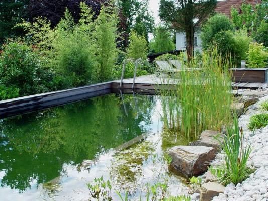 Top Jederzeit geöffnet: Der eigene Schwimmteich - Pflanzen - Garten &KQ_33